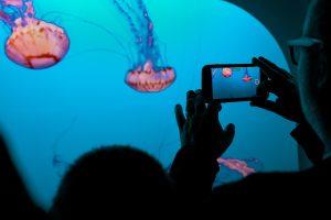 Creating a booster club Instagram Reel at an Aquarium.