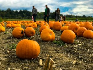 Hold a pumpkins sale for your booster club halloween fundraiser.